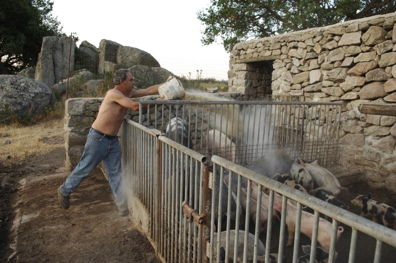 Über 100 Hektar verwalten die beiden Brüder Costa und Pepe auf ihrem Bauernhof, dem Agroturismo Costiolu auf Sardinien. Auf einem Gebiet, das seit über 3000 Jahren bewohnt ist, züchten die beiden Schafe und Ziegen und stellen alle Produkte wie Milch, Schinken, Käse oder Honig selbst her. In der fast unberührten Natur gibt es noch freilaufende Wildschweine und Füchse, sogar Adler kreisen am Himmel.